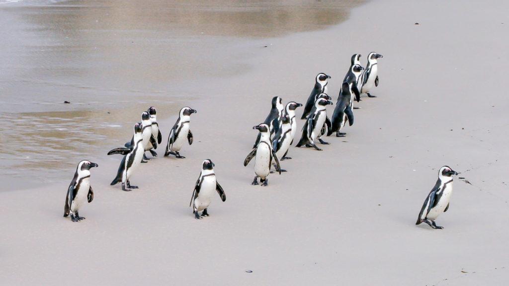 Penguins leadership